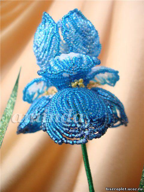 Ирис королевский синий