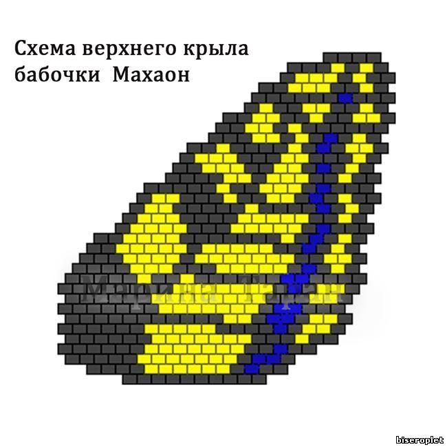 Бабочка Махаон - схема верхнего крыла